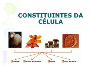 ESTRUTURA MOLECULAR DA CÉLULA PROVA.pdf