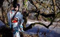 japan-girl-tree.jpg