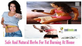 Natural Herbs For Fat Burning At Home.pptx